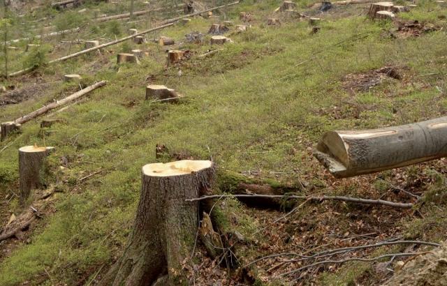 Palą lasem naszą kasę – powstrzymaj spalanie węgla zbiomasą!