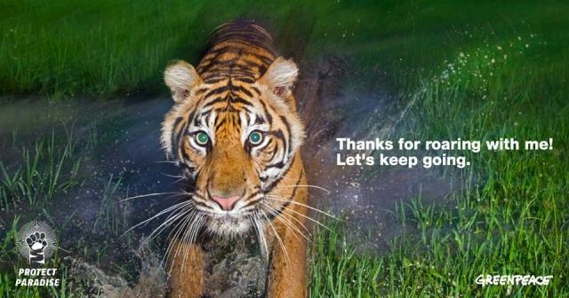Procter & Gamble także przyjmuje wyzwanie tygrysa by chronić raj