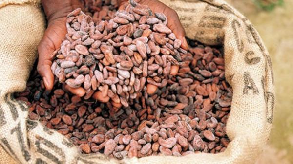 7 popularnych marek czekolady, które wyzyskują dziecięcych niewolników.