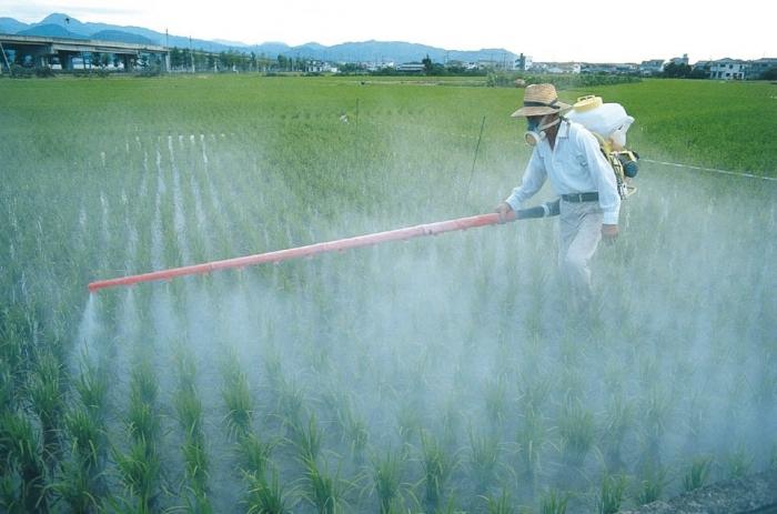 Eksperci ONZ obalają mit, że pestycydy są niezbędne do wykarmienia świata