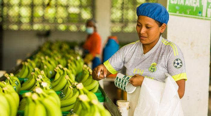 Uprawa isprzedaż bananów. Ukryte koszty zewnętrzne.