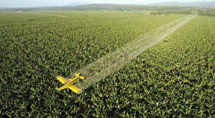Stosowanie pestycydów przy uprawie bananów. Skutki izagrożenia.