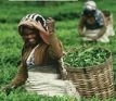 Akcja Fair Trade wkrakowskich kawiarniach - przyłącz się lub zainicjuj wTwoim mieście