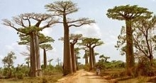 Daewoo na Madagaskarze