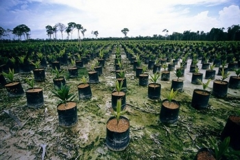 Nie kupuj oleju palmowego