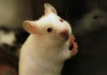 Lipton prowadził okrutne testy na zwierzętach