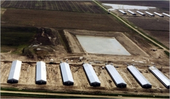 Przemysłowa produkcja mięsa agłód na świecie