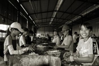 Tysiące dzieci pracuje na farmach orzechów nerkowca