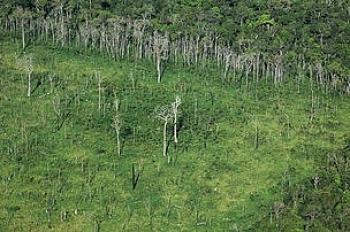 2011 rokiem lasów?
