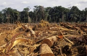 Powstrzymaj masakrę wAmazonii ipodpisz petycję do Prezydent Brazylii