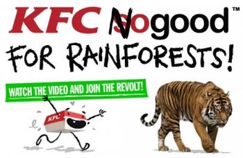 KFC męczy kurczaki oraz niszczy lasy na Sumatrze