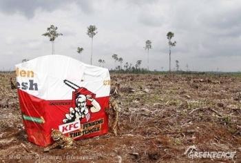 KFC wziąż niszczy lasy na Sumatrze - wyslij list do Dyrektora Generalnego Davida Novaka