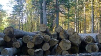 Drewno wUnii będzie legalne – nowe rozporządzenie UE