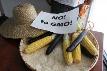 GMO: dlaczego nie?