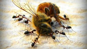 Bayer śmiertelny dla pszczół