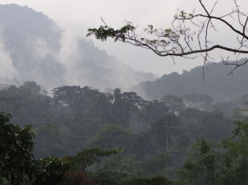 Plantacje palmy olejowej wAfryce Zachodniej zagrażają ludziom iśrodowisku