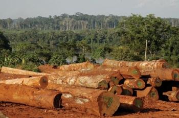 Unijna delegalizacja nielegalnego drewna