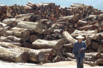 Chińska produkcja niszczy tajgę izagraża tygrysom