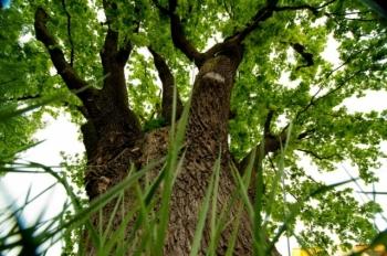 Zasadź drzewo wŚwiatowy Dzień Drzewa