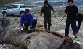 Tesco, Aldi oraz Carrefour: przypilnujcie swoich dostawców, by nie zabijali wielorybów plastikowymi odpadami!