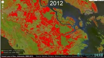 Zobacz jak znikają lasy na własne oczy