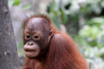 Przyjazny środowisku olej palmowy?
