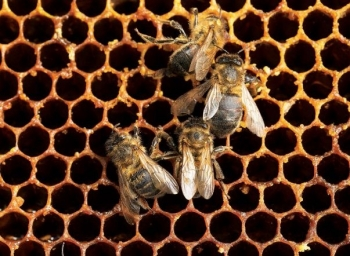 "Raport Greenpeace: ""Trudny los pszczół"""