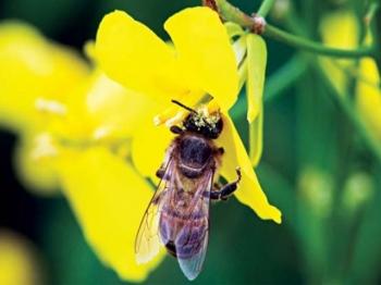 Raport: przyszłość pszczół – świat bez pestycydów