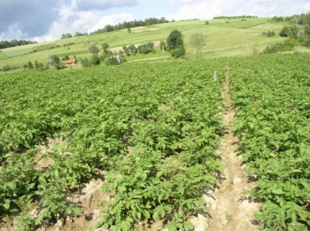 Ruch Fair Trade apeluje do Ministra Rolnictwa wsprawie nowych regulacji KE dotyczących rolnictwa ekologicznego