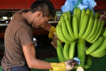 Kolumbijscy pracownicy plantacji bananów zarobią więcej!