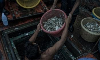 Tajski przemysł rybny. Od obozów pracy na europejskie stoły