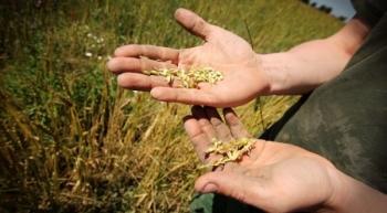 5 pomysłów na uratowanie światowego systemu żywnościowego