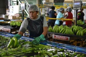 Bananowy raj, czy piekło na ziemi?
