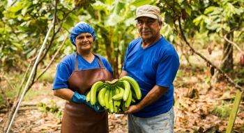 Fairtrade daje siłę. Przykład współpracy drobnych producentów bananów, wramach spółdzielni ASOGUABO wEkwadorze