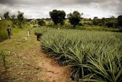 Prawo do żywności jako jedno znajważniejszych praw człowieka