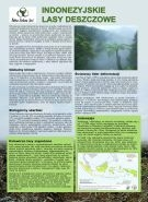 Indonezyjskie lasy deszczowe. Broszura na temat działalności firmy Asia Pulp and Paper
